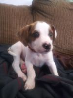 Mixed Puppies for sale in Mentor, OH 44060, USA. price: NA