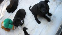 Mixed Puppies for sale in Erlanger, KY, USA. price: NA