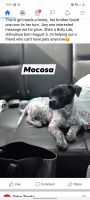 Mixed Puppies for sale in Plano, IL 60545, USA. price: NA