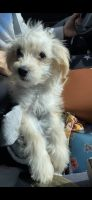 Mixed Puppies for sale in Monroe Township, NJ 08831, USA. price: NA