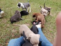 Mixed Puppies for sale in Hattiesburg, MS, USA. price: NA