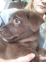 Mixed Puppies for sale in Leesburg, OH 45135, USA. price: NA
