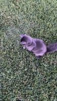 Mixed Cats for sale in Missouri City, TX, USA. price: NA