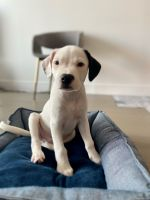 Mixed Puppies for sale in New York, NY, USA. price: NA