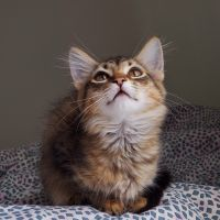 Mixed Cats for sale in Portland, OR 97236, USA. price: NA