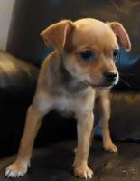 Mixed Puppies for sale in Spokane, WA, USA. price: NA