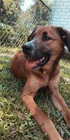 Mixed Puppies for sale in Calhoun, LA 71225, USA. price: NA