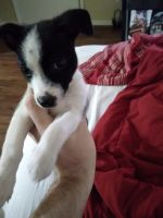 Mixed Puppies for sale in San Antonio, TX, USA. price: NA