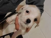Mixed Puppies for sale in St Paul, MN, USA. price: NA