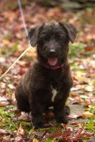 Mixed Puppies for sale in Winchester, VA 22601, USA. price: NA