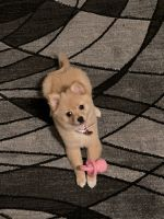 Mixed Puppies for sale in Boise, ID, USA. price: NA