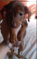 Mixed Puppies for sale in Minford, OH 45653, USA. price: NA