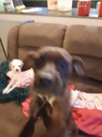Mixed Puppies for sale in Indianapolis, IN, USA. price: NA