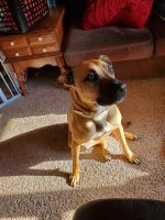 Mixed Puppies for sale in Urbana, OH 43078, USA. price: NA