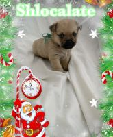 Mixed Puppies for sale in Gastonia, NC, USA. price: NA