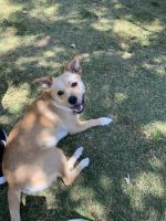 Mixed Puppies for sale in Van Nuys, Los Angeles, CA, USA. price: NA