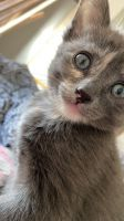 Mixed Cats for sale in Edgewood, NM 87015, USA. price: NA