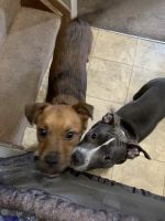 Mixed Puppies for sale in Columbus, OH, USA. price: NA
