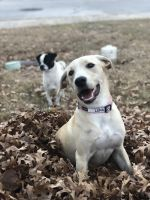 Mixed Puppies for sale in Kyle, TX, USA. price: NA
