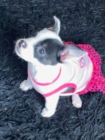 Mixed Puppies for sale in Washington, DC, USA. price: NA