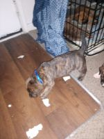 Mixed Puppies for sale in Englewood, CO, USA. price: NA