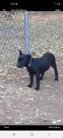 Mixed Puppies for sale in Payson, AZ 85541, USA. price: NA