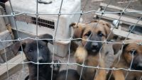 Mixed Puppies for sale in Bandera, TX 78003, USA. price: NA