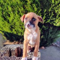 Mixed Puppies for sale in Spring Valley, CA 91977, USA. price: NA