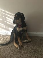 Mixed Puppies for sale in Conyers, GA, USA. price: NA