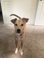 Mixed Puppies for sale in Plymouth Meeting, PA, USA. price: NA