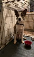 Mixed Puppies for sale in Stuebner Airline Rd, Spring, TX, USA. price: NA