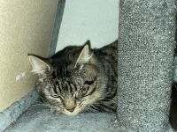 Mixed Cats for sale in Manteca, CA 95337, USA. price: NA