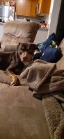 Mixed Puppies for sale in Troutdale, OR 97060, USA. price: NA