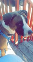Mixed Puppies for sale in 261 Knox Ct, Denver, CO 80219, USA. price: NA
