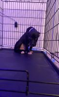Mixed Puppies for sale in Virginia Beach, VA, USA. price: NA