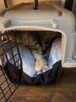 Mixed Cats for sale in Atlanta, GA, USA. price: NA