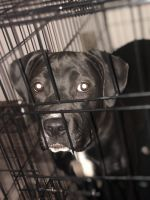 Mixed Puppies for sale in Columbus, OH 43232, USA. price: NA