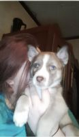 Mixed Puppies for sale in Salt Lick, KY 40371, USA. price: NA