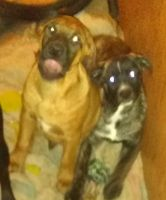 Mixed Puppies for sale in Gilman, WI 54433, USA. price: NA
