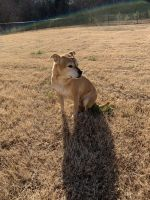 Mixed Puppies for sale in Monroe, GA, USA. price: NA