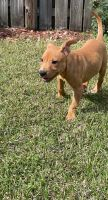 Mixed Puppies for sale in Gainesville, FL, USA. price: NA