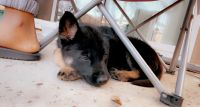 Mixed Puppies for sale in Poway, CA, USA. price: NA
