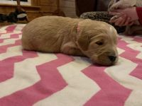 Mixed Puppies for sale in Ashville, AL, USA. price: NA