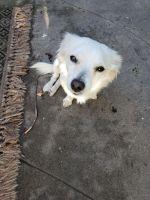 Mixed Puppies for sale in La Mesa, CA 91942, USA. price: NA