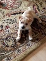 Mixed Puppies for sale in 3609 Woodside Dr, Arlington, TX 76016, USA. price: NA