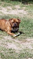 Mixed Puppies for sale in Ocala, FL 34472, USA. price: NA