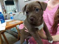 Mixed Puppies for sale in Atlanta, GA, USA. price: NA