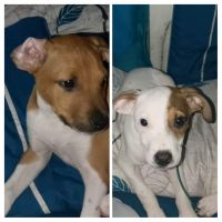 Mixed Puppies for sale in Bentonville, AR, USA. price: NA