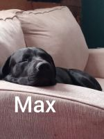 Mixed Puppies for sale in Mooresville, IN, USA. price: NA