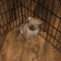Mixed Puppies for sale in Perry, FL, USA. price: NA
